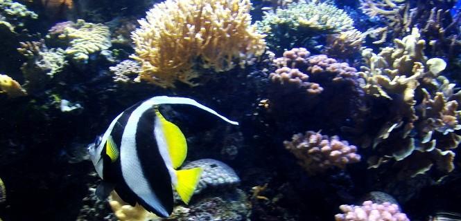 Monterey Bay Aquarium Big Blue Live