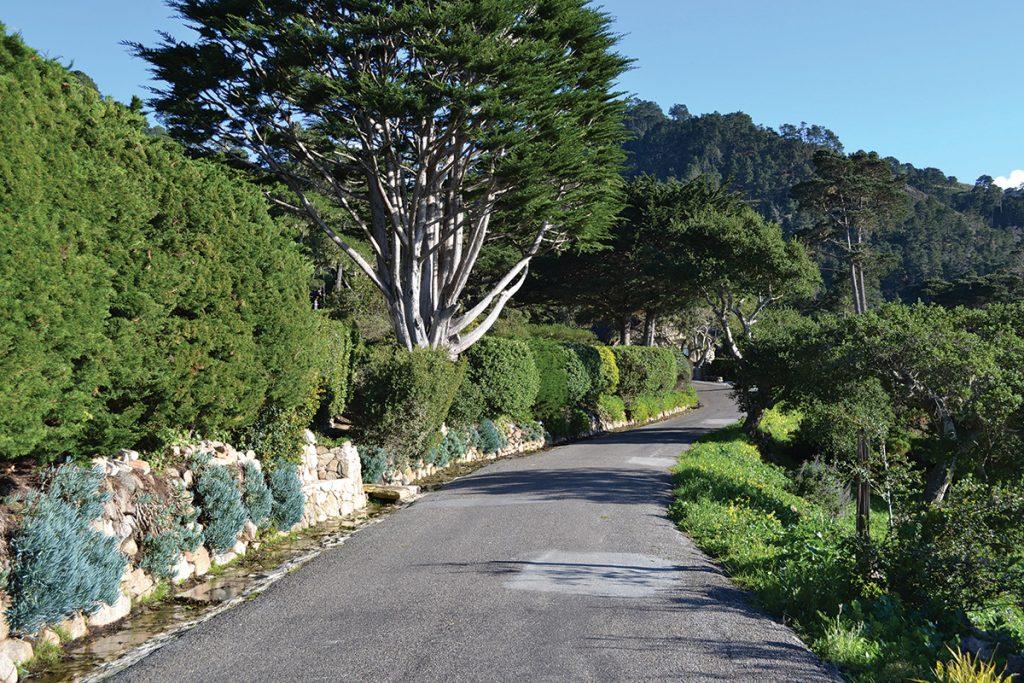 Carmel Highlands Nature Walk